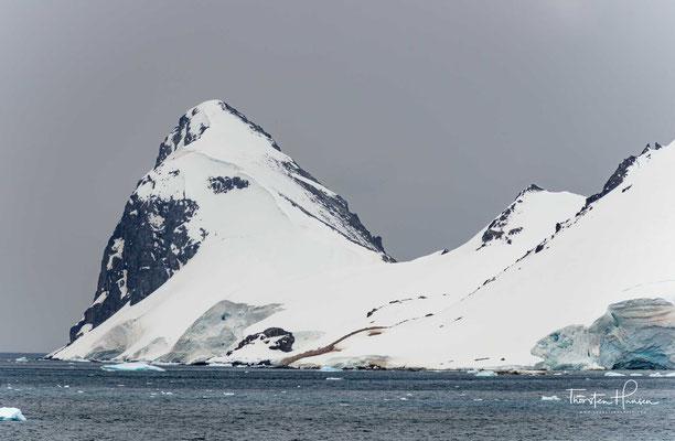 In den Meeren wimmelt es von riesigen Schwärmen antarktischen Krills (Euphausia superba) und anderer Kleinkrebse.