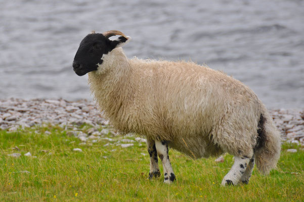Wanderung entlang des Loch Morar