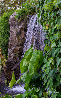 Sir Stamford Raffles gründete 1822 einen botanischen Garten auf dem Government Hill (Fort Canning Hill) und versuchte, hier vor allem wirtschaftlich wichtige Güter wie Kakao und Muskat anzubauen.
