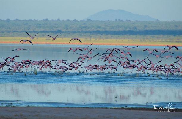 Flamingos im Tarangire-Nationalpark