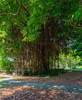 2015 wurde der Garten als erste Stätte Singapurs ins UNESCO-Weltkulturerbe aufgenommen.[1]