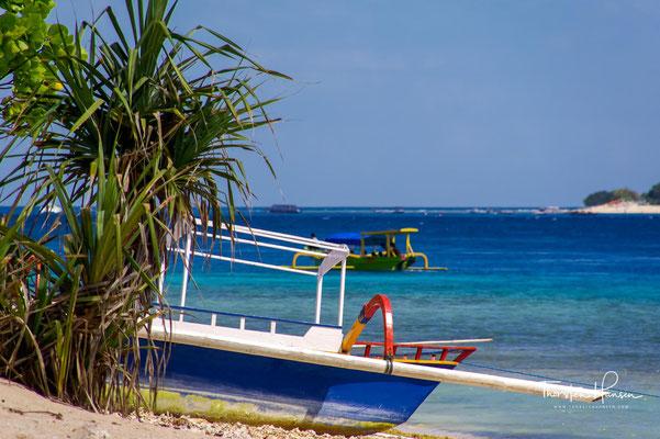 Die Flora und Fauna auf der Insel sind teilweise noch unberührt.