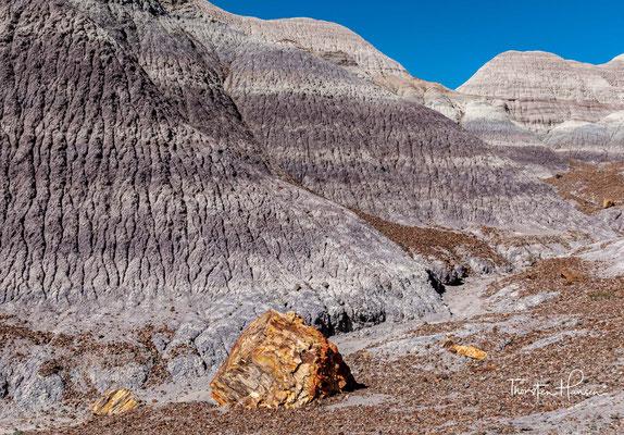 Vergraben von weiteren Ablagerungen verlangsamte sich der natürliche Zerfall des Holzes aufgrund fehlenden Sauerstoffs.