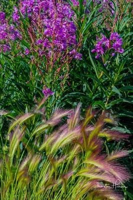 Red Weed im Yukon