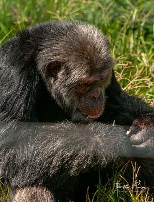Besucher werden in einer Führung auf die Problematik der Wildtierjagd aufmerksam gemacht und lernen, wie der Verlust der Lebensräume sich auch negativ auf das Leben der Menschen auswirkt.