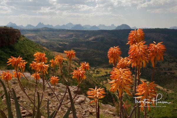 Blick über die Adua Berge