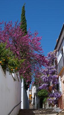 Blütenzauber in Ronda