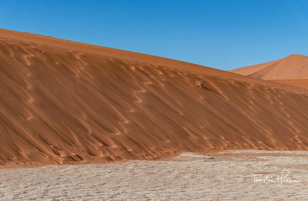 Aufgrund der extremen Trockenheit verrotten sie nur sehr langsam und sind deshalb bis heute erhalten.