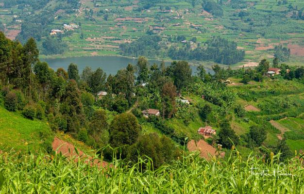"""Der See erschien von 2004 bis 2009 auf dem 5.000-Schilling-Schein Ugandas unter dem Titel """"Lake Bunyonyi and terraces""""."""