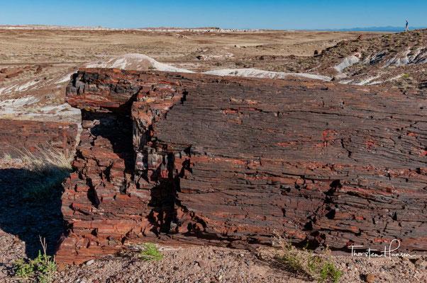 Sehr viel später einsetzende tektonische Bewegungen in der Erdkruste hoben die Landoberfläche heraus,...