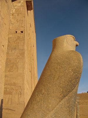 Falken als Sinnbild des Gottes Horus