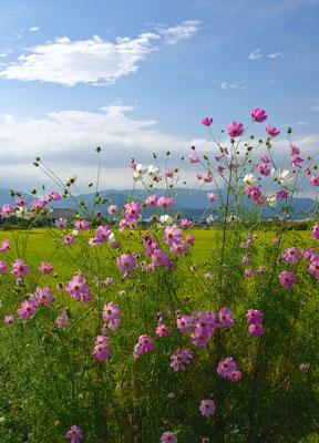 Blütenpracht am Strassenrand