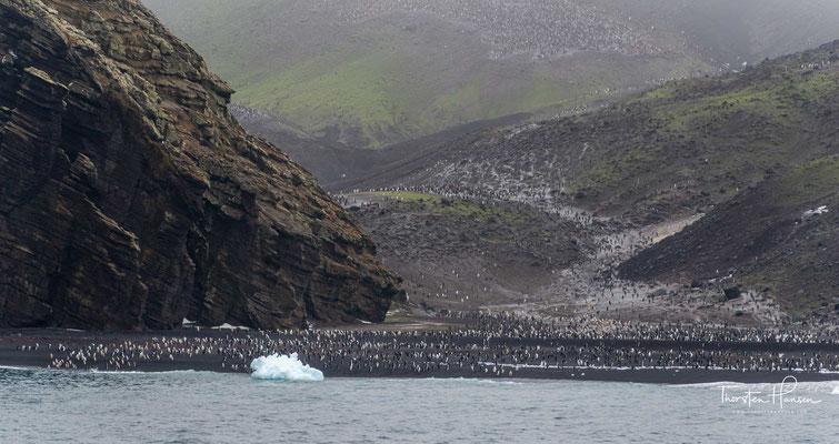 """Baily Head"""" ist der einzige für Kreuzfahrtschiffe freigegebene Anlandungspunkt am Außenrand der Insel. Auf dem Felsvorsprung befindet sich eine der größten Brutkolonien von Zügel-Pinguinen (Kehlstreifen-Pinguinen) der gesamten Antarktis."""