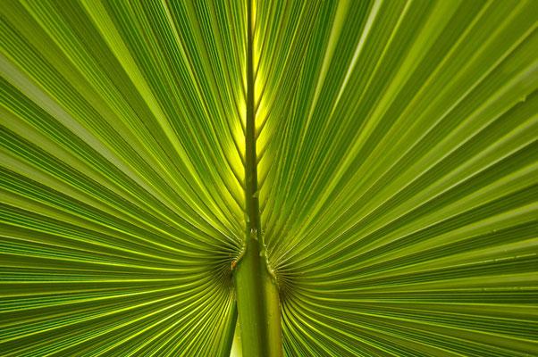 Palmen im Mataranka Hot Springs im Elsey National Park