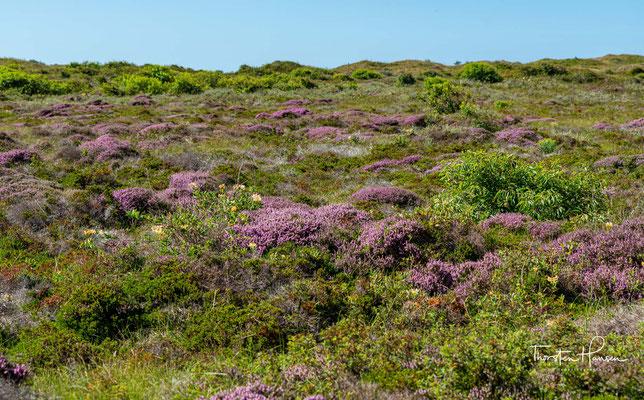 Der Nationalpark erstreckt sich über die ganze Westküste von Texel und hat eine Länge von etwa 22 Kilometern bei einer maximalen Breite von vier Kilometern im Süden und Norden.