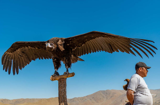 Die Berkutschis – die Adlermänner – sind Kasachen, die in der Mitte des 18.Jahrhunderts in die Mongolei eingewandert sind und heute als ethnische Minderheit zur mongolischen Bevölkerung gehören.
