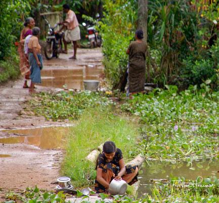 Die Backwaters werden intensiv landwirtschaftlich genutzt. Kokospalmen, Kautschuk, Reis und Cashewbäume sind die wichtigsten Anbaupflanzen.