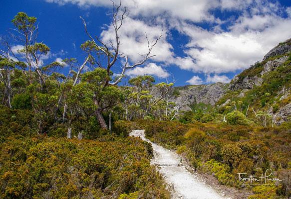 Die Wanderroute führt durch das tasmanische Hochland, vorbei an Tasmaniens höchstem Berg, dem Mount Ossa (1617 m).