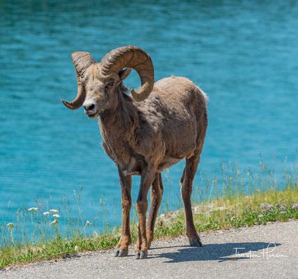 Der Lower Consolation Lake im Banff National Park (2)