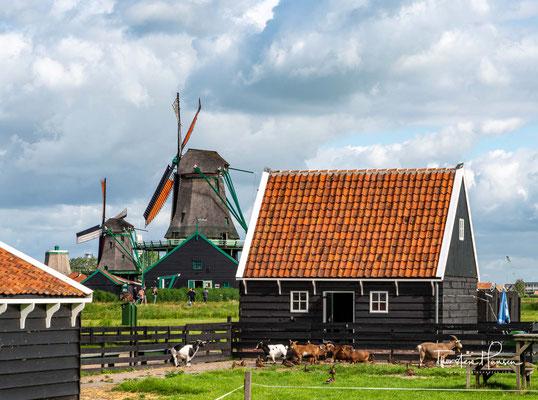 Erst seit 1961 haben sie nach einem fachgerechten Abbau und Wiederaufbau eine neue Heimat in dem Museum Zaanse Schans gefunden.