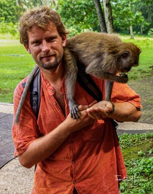 Um die Gesundheit der Affen zu erhalten, sollte man die Affen nicht füttern!