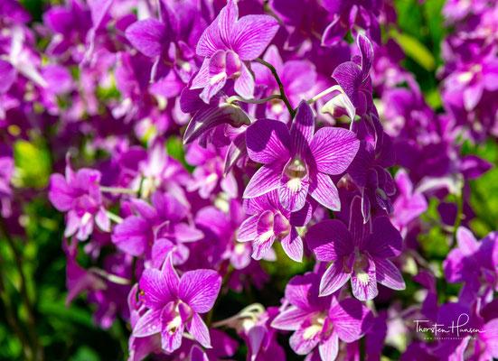 Dieser ist heute vor allem für sein Interesse an der Kautschuk-Produktion bekannt. Der Garten lieferte während des Kautschuk-Booms Pflanzen für die Plantagen Malaysias.
