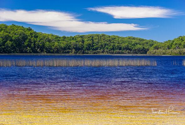 Der Lake McKenzie (Boorangoora in der Sprache des Aboriginesstammes der Butchulla) ist ein flacher Grundwassersee auf Fraser Island