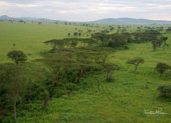 Ballonfahrt im Serengeti National Park