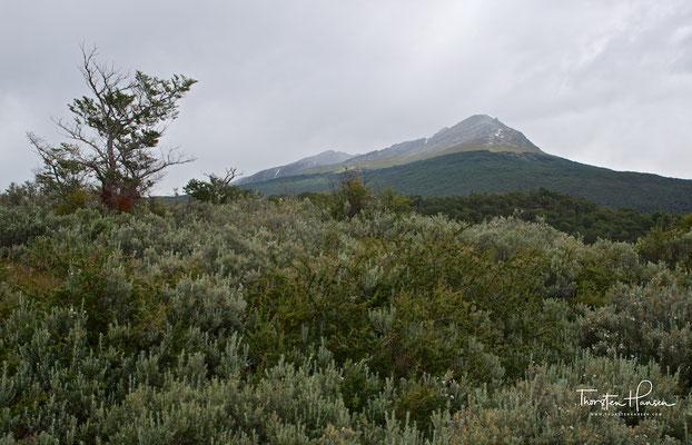Im Gegensatz zu anderen Nationalparks in Argentinien, beinhaltet dieser sowohl Küste, als auch Wald und Gebirge.