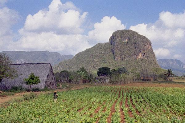 Tabakanbaugebiet Valle de Viñales