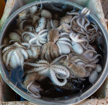 Frische Oktopusse in Kep