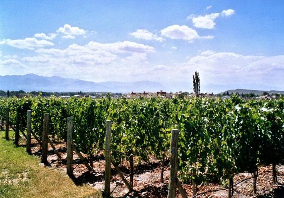 Weingut Cava de Cano in Mendoza