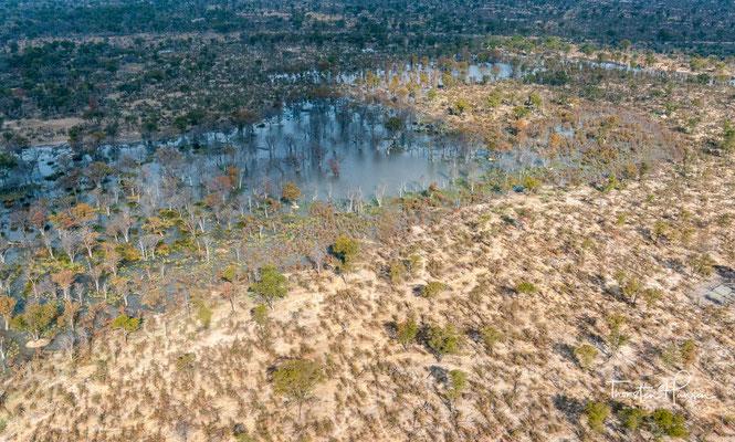 ...ie zeitweilig trocken fallenden Bereiche an der Peripherie des Deltas sowie die größeren Inselbereiche im Inneren des Deltas (Chiefs Island, Chitabe Island) und die Sandveld-Zungen, die sich von Süden her in das Delta erstrecken.