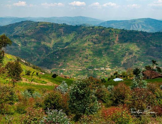 Landschaft am Bunyonyi-See liegt sieben Kilometer von der Stadt Kabale entfernt. Er ist 25 Kilometer lang, sieben Kilometer breit und bedeckt eine Fläche von 6100 Hektar.