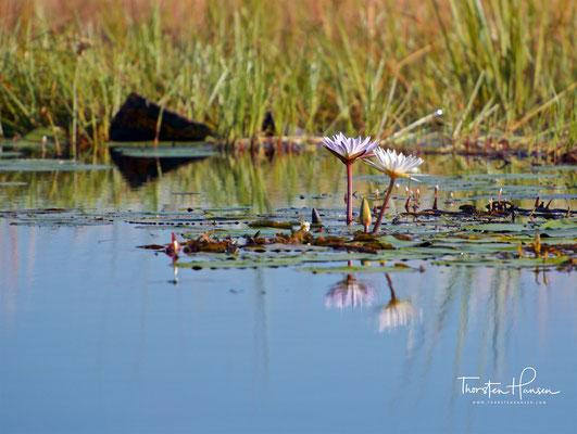 Am Okavango