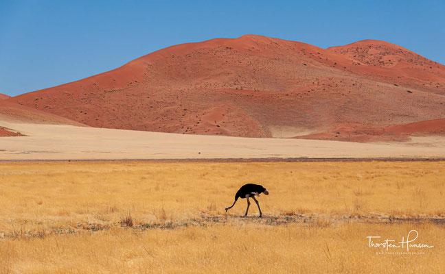 Es wurde wegen seiner herausragenden Wüstenlandschaft, der reichen Tier- und Pflanzenwelt mit großer endemischer Vielfalt und den geologischen Prozessen zum Weltnaturerbe erklärt.