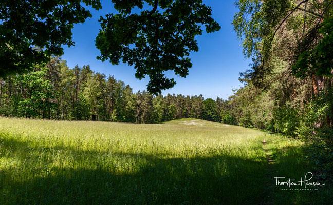 Der Elm ist ein naturbelassenes Waldstück in der Oberpfalz