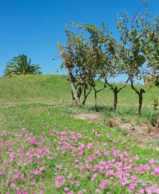 Beste kalkhaltige Böden fördern eine ausgeglichene Ernte und ermöglichen dem Weingut Trauben der Extraklasse zu kultivieren.