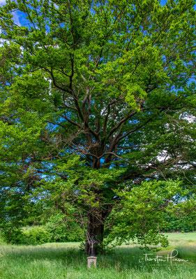Wunderschöner Baum an der Hutzlmühle