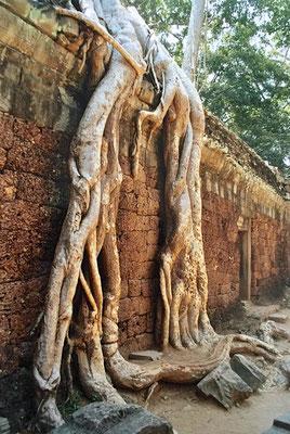 Tempel Ta Prohm