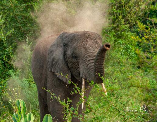 Ursprünglich lebten ca. 4000 Elefanten im Park, deren Zahl in den 80er Jahren auf nur knapp 200 Elefanten sank. Heute hat sich die Tierwelt wieder deutlich erholt und es werden 3000 Elefanten geschätzt.