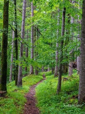 Der Große und der Kleine Ahornboden sind zwei landschaftlich beeindruckende Almböden mit alten Berg-Ahornbeständen im nördlichen Karwendel.