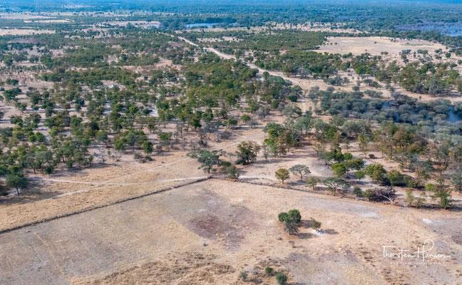 Dabei bildet er inmitten der semi-ariden Kalahari mit über 20000 Quadratkilometern eines der größten und tierreichsten Feuchtgebiete Afrikas.