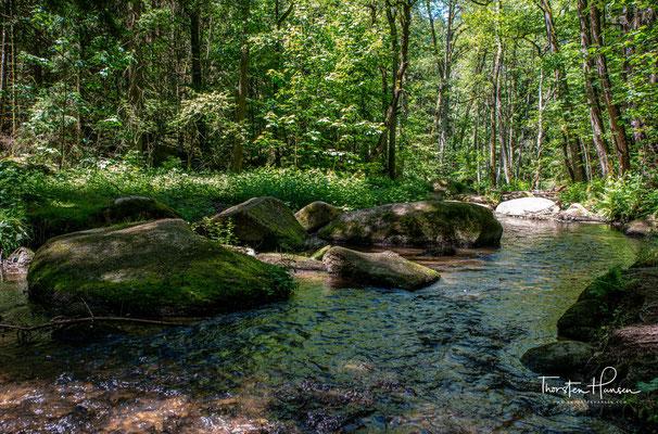 Ein echter Geheimtipp für Wanderer ist das Lerautal, das 2010 von der Heinz-Sielmann-Stiftung zum zweitschönsten Waldgebiet Deutschlands gekürt wurde.