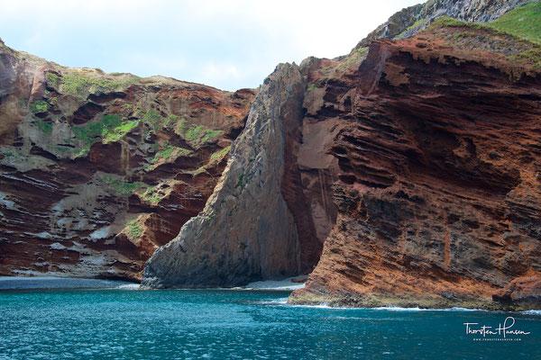 Hector Delfin im Akaroa Harbour