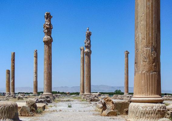 Die Säulenreste der Apadana-Halle in Persepolis. Die Halle war mit ihren 20 Meter hohen Säulen, bei denen Stierkapitelle das Dach trugen, eines der architektonischen Wunder der Antike.