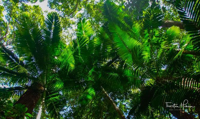 Während sie schlief, zog er ihr die Regenwälder als Kleider an und bemalte ihren Körper in den Farben des Regenbogens, ihren Augen verlieh er den Glanz und Glitzer der Seen auf der Insel.