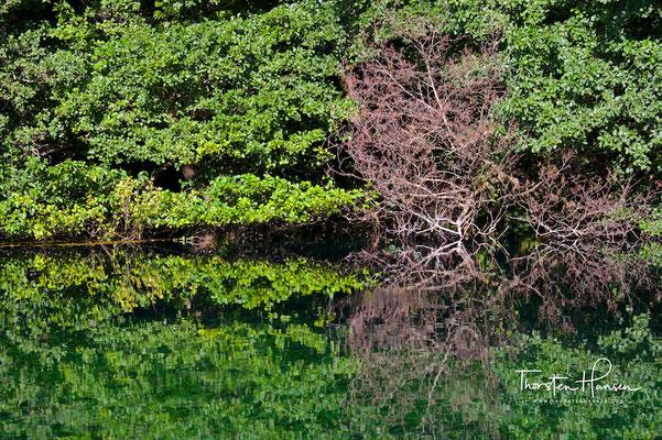 Quellteich vom Ohridsee am Kloster Sveti Naum