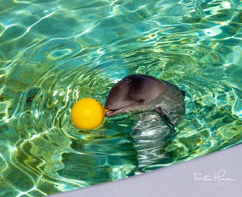 ...indem die Tier- und Pflanzenwelt der Insel sowie das Wattenmeer und die Ökologie der Nordsee vorgestellt werden.