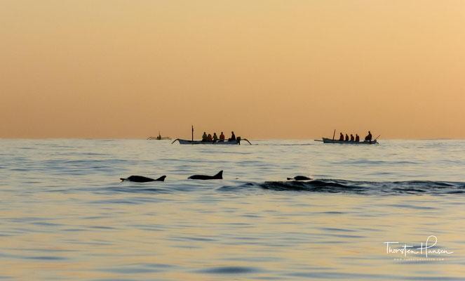 Die weithin sichtbare Delfin-Statue weist auf eine der Haupt-Aktivitäten in Lovina hin: Dolphin Watching.